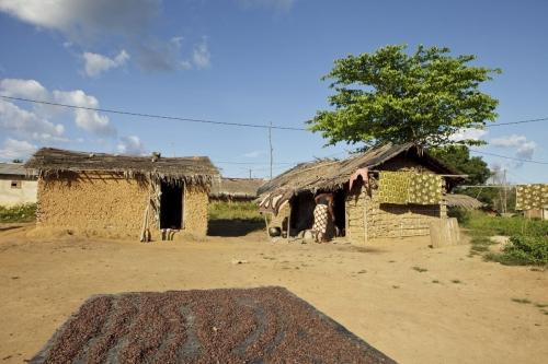 Photo de cerises de café séchant au soleil dans un village de brousse. Reportage photographique sur le café en Côte d'Ivoire commandé par la marque Nescafé® de Nestlé®. | Philippe DUREUIL Photographie