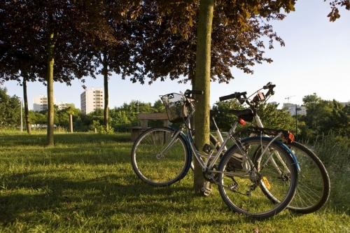 Vélos appuyés contre un arbre