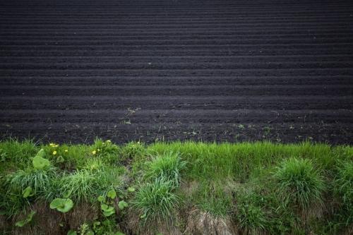 Champs de terre noir à Hokkaido, Japon