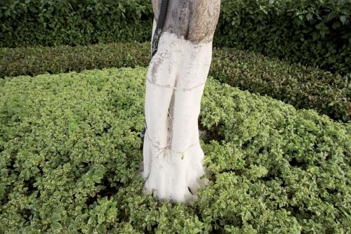 Tronc d'arbre passé au lait de chaux | Philippe DUREUIL Photographie