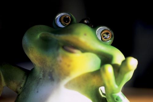 Portrait d'une grenouille en plastique | Philippe DUREUIL Photographie