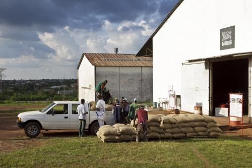 Livraison de sacs de café vert dans un centre d'achat de café vert en Côte d'Ivoire | Philippe DUREUIL Photographie