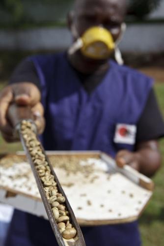 Prise d'échantillon au centre d'achat café vert, Côte d'Ivoire. | Philippe DUREUIL Photographie