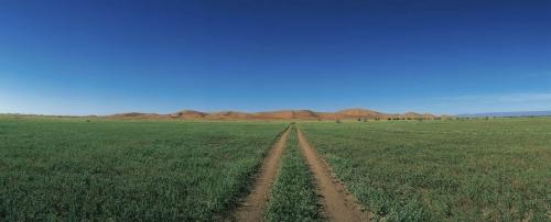 Photographie panoramique du désert au Maroc après la pluie