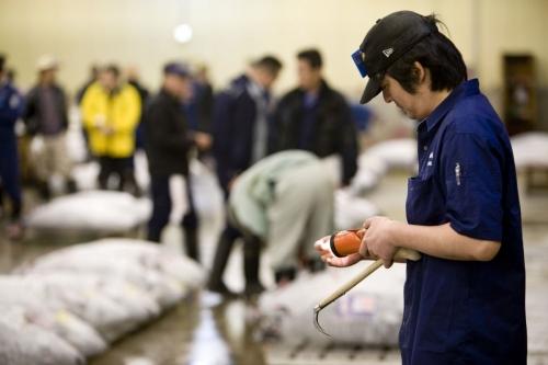 Un acheteur examine à la lampe de poche un échantillon de la chair du thon avant la vente aux enchères | Philippe DUREUIL Photographie