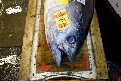 Thon sur un chariot en bois au marché aux poissons de Tsukiji à Tokyo Japon | Philippe DUREUIL Photographie